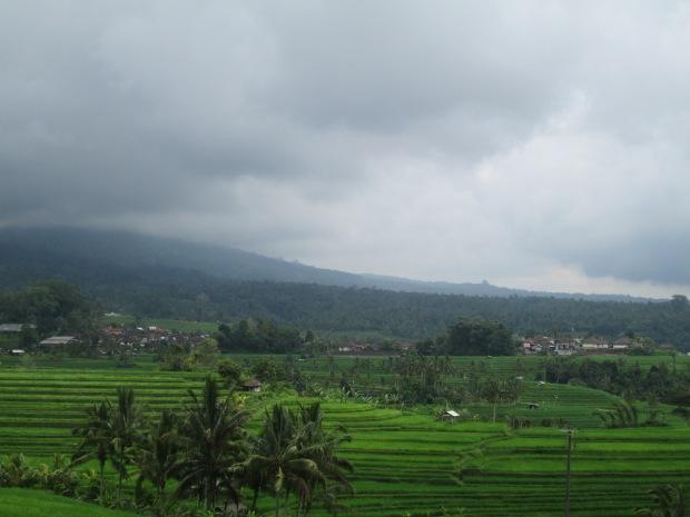 Rice Field  06